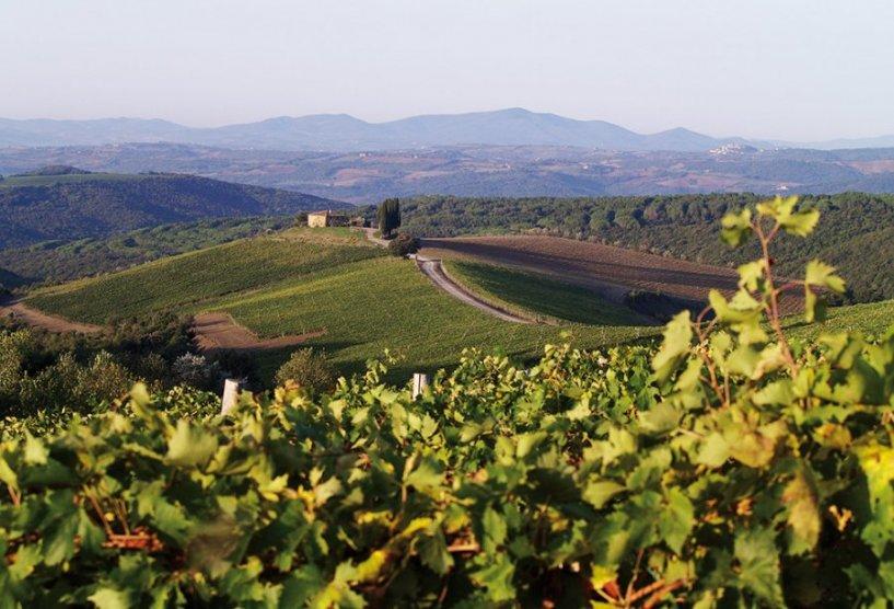 Capanna Vineyards