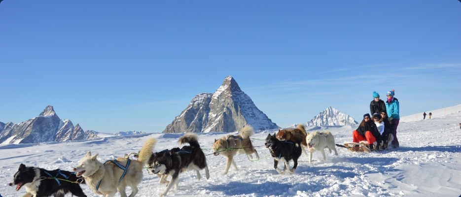 Zermatt summer huskies